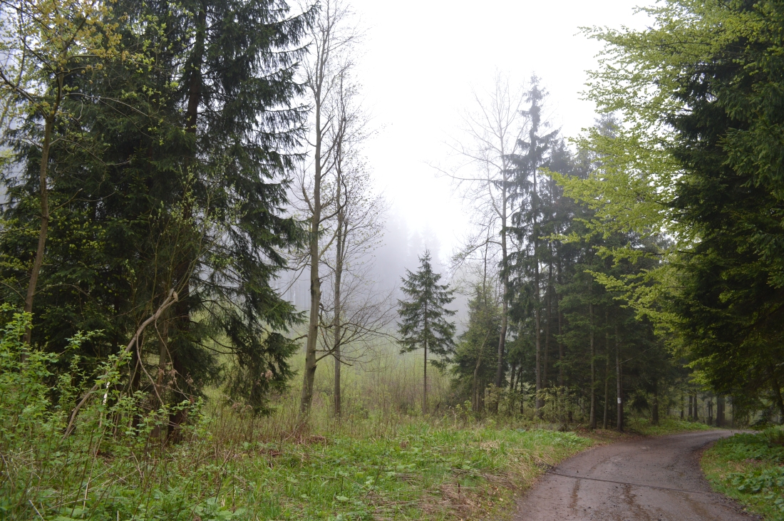 A foggy day in a forest in Poland
